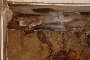 Affordable Dry Rot Repair